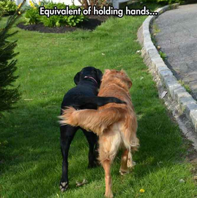 Equivalent of holding hands - We are Not Just Friends